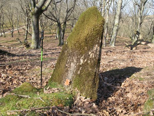 24-Sare- Nabarlatz- dalle plantée