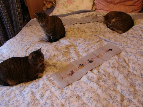 kitty cat row 001