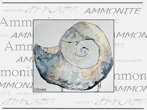 AMMONITE-2.jpg
