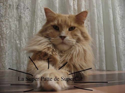 supercat3-copie-1.jpg