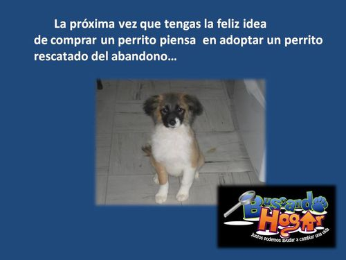 PERRO-MESTIZO-.jpg