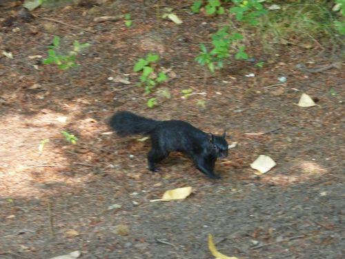 Jour 28 Stanley Park jardins écureuil