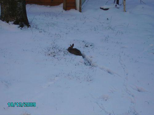Lapin jardin neige près blog