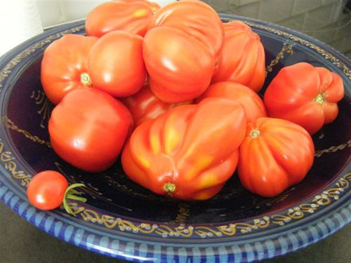 recolte-tomate-07-2011-006.jpg