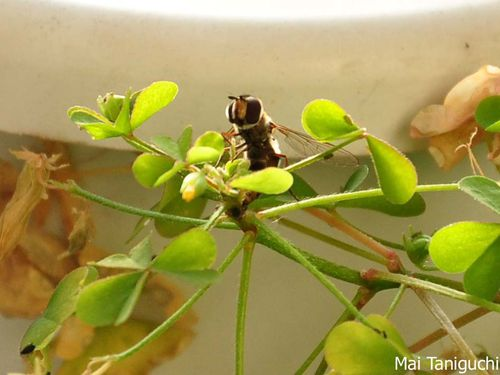insects 1664mini
