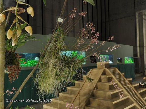 strepy_Chichen_itsa_aquariums_.jpg