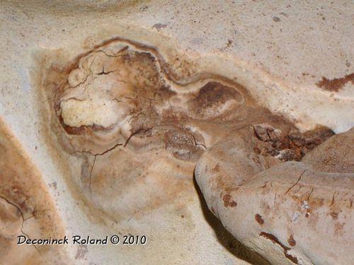 insolite champignon shrek detail
