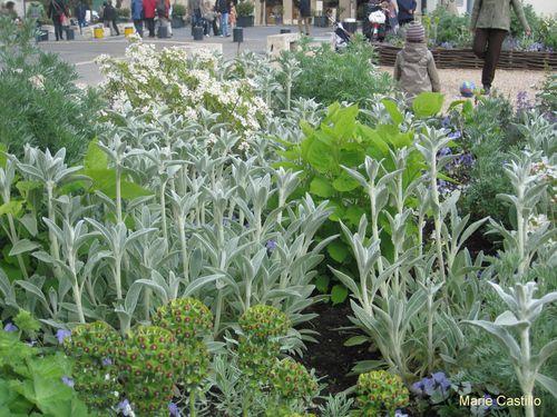 Chartres-jardin-medieval-3.JPG