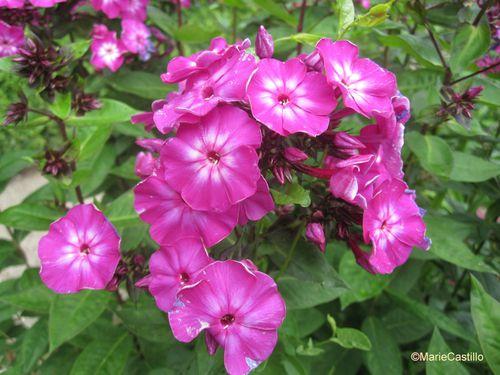 Giverny-19-juin-2011-1-Marie-Castillo.JPG
