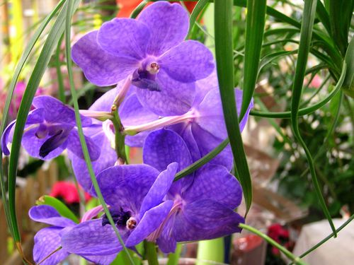 Labelorchidee-2012--2-.JPG