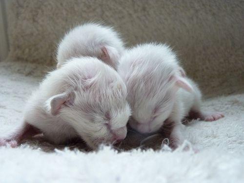 3-day-old-kittens.jpg