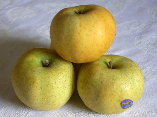 Pomme chantecler belchard
