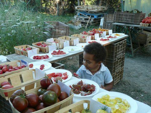degustation-tomates-juillet-2011-029.jpg