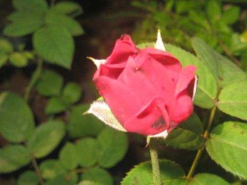 promesses-de-fleurs 0282