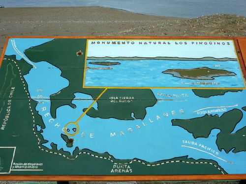 C15 Punta Arenas - Isla Magdalena 47
