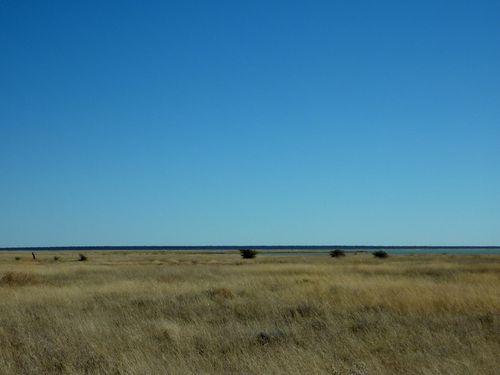 02 Etosha - Namutoni Savanne 21