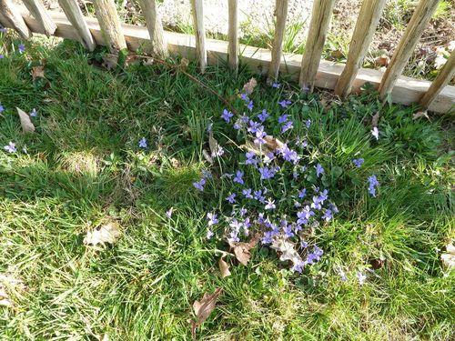 012_R-les-violettes.jpg