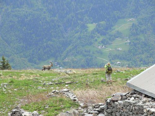 2010-06-01 Aiguillette des Houches 7