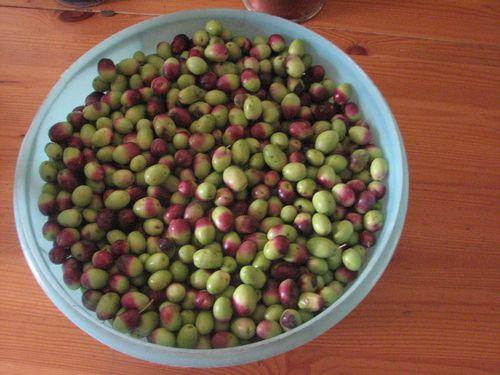 2011.11.09-3-500-kg-d-olives.jpg