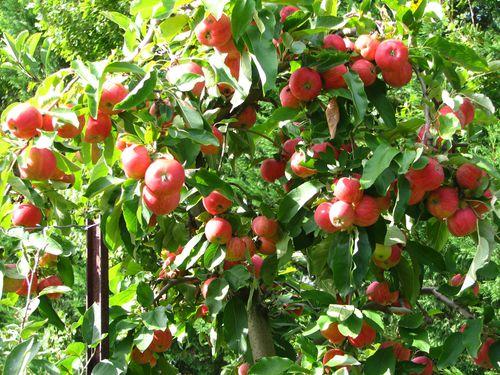 2010.09.25 Pommes12