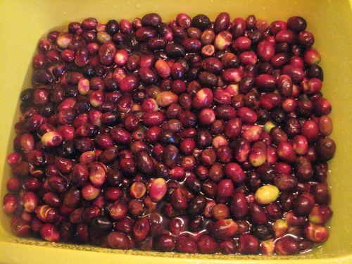 2011.12.14-Nos-olives-noires.jpg