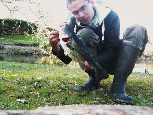 bass 41cm