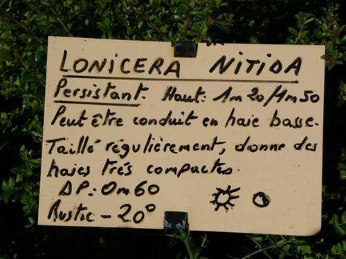 LONICERA-NITIDA----.jpg