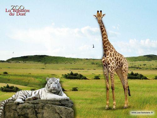 zoo de la boissere - animaux en resine grandeur nature