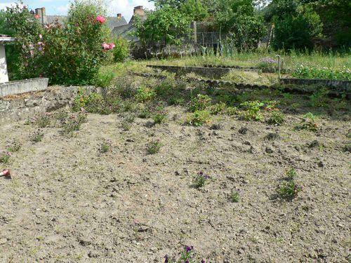 2010-05 Potager desherbé