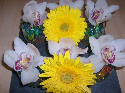 orchidees.jpg