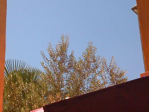 Hue Cocotte (7)