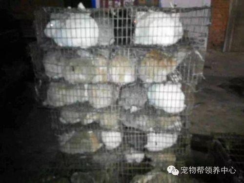 2014-12-19-Henan-Xingyang 3424