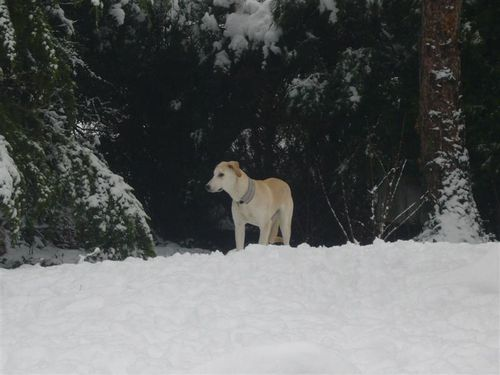 KATY dans la neige 1 (Medium)