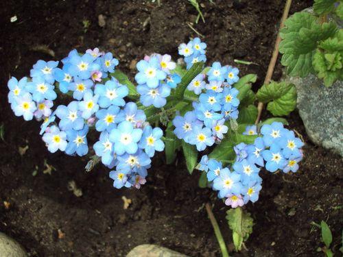 22 mai fleurs 001