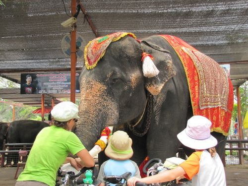 Ayutthaya Elephant Camp 2