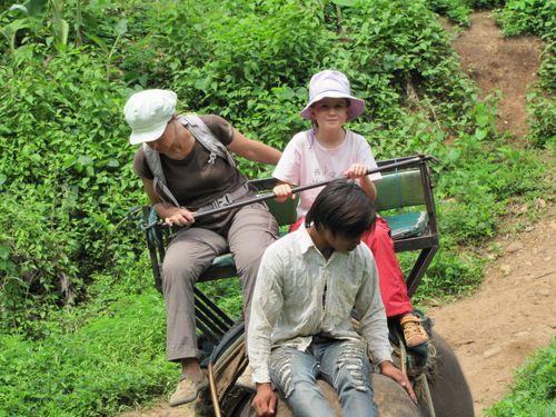 Mae Ping village des éléphants balade en pleine nature 10