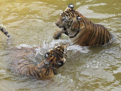 Temple du tigre jeux d'eau 3