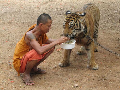 Temple du tigre repas 1