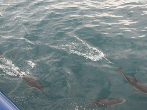 Kaikoura Whale Watch 16