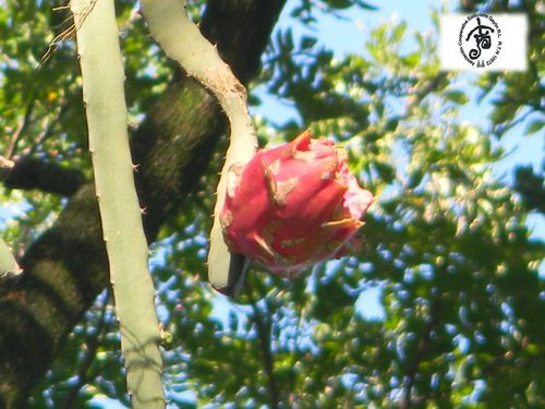 Rosa-bella.jpg