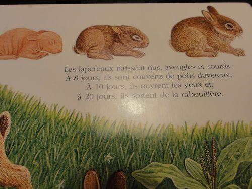 livre-lapin-gallimard-2.JPG