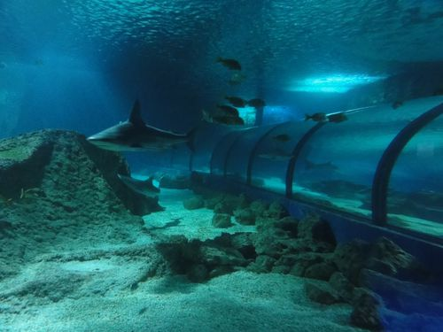 tunnel-de-requins-marineland.JPG