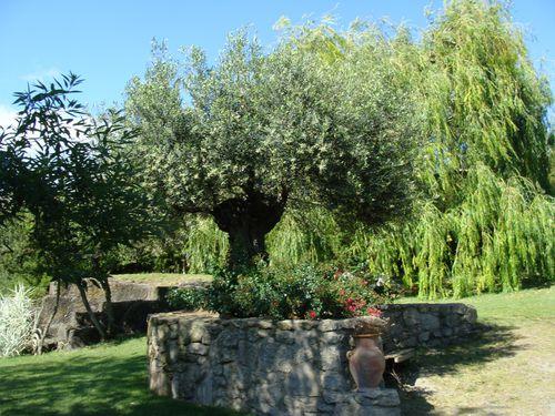 Le jardin St Adrien (10)