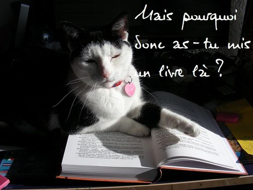 Plume-revisions.jpg