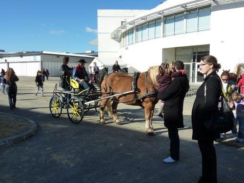 Le blog de - Salon du cheval montpellier ...