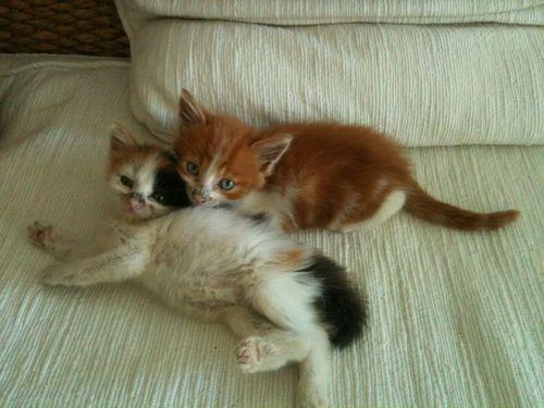 chatons-clotilde.jpg