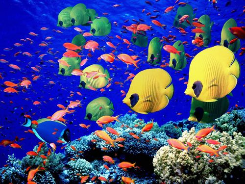 wallpaper-poissons-tropicaux