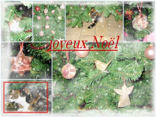 montage cannelle