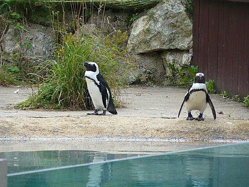 zoo-de-Pont-Scorff--2-.jpg
