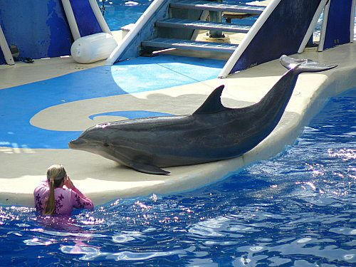 Sea-World---Orlando--11-.jpg